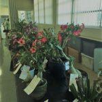 Horticulture_3